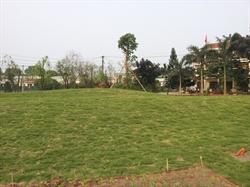 Vườn hoa Tân Phú Hưng